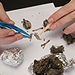 Shop for Owl Pellets
